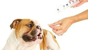 Levothyroxine For Dogs: Uses, Dosage, And Side Effects