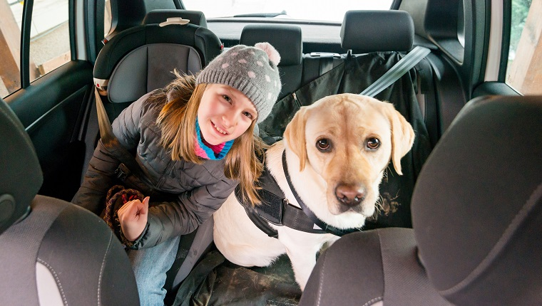 10 years old girl and her yellow labrador sitting on the back seat of a car. Cluj-Napoca, Transylvania, Romania