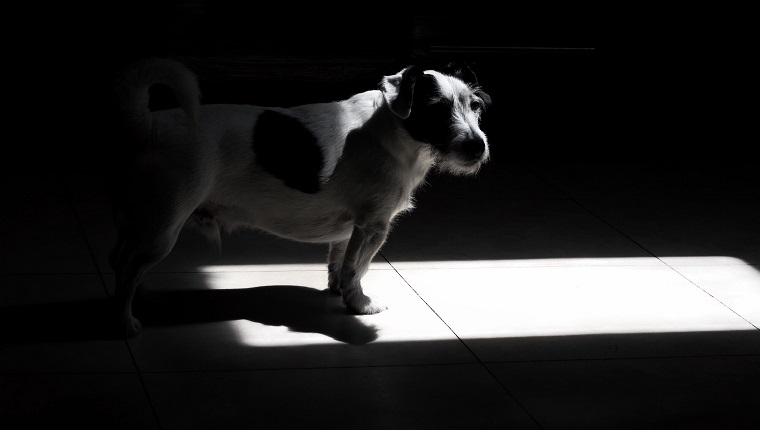 Dog In Darkroom At Home