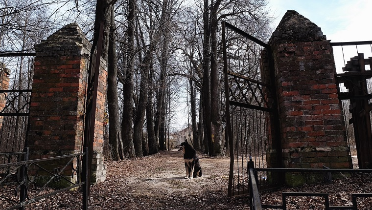 Dog Sitting By Cemetery Entrance Against Bare Trees