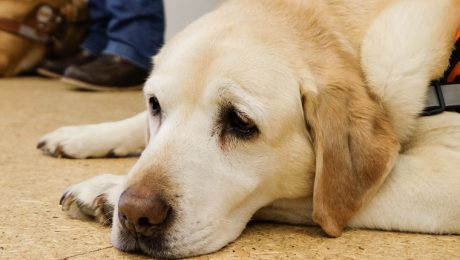 Serotonin Syndrome In Dogs: Symptoms, Causes, & Treatments