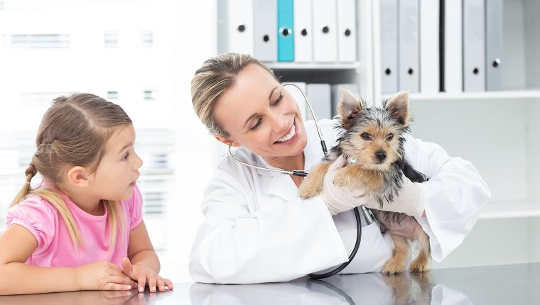 Female veterinarian examining puppy with girl in clinic