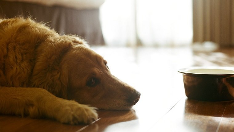Can Anxiety Cause Vomiting In Dogs