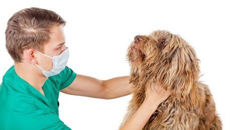 Swollen Lymph Nodes In Dogs: Symptoms, Causes, & Treatments