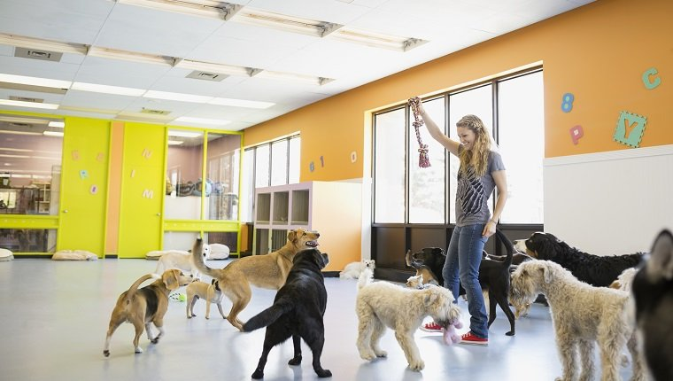 Woman playing with dogs at dog daycare