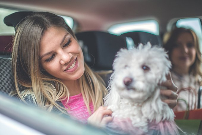 Uber, Lyft, & Taxis With Dogs: What Car Services Let You Bring Dogs