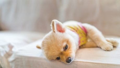 Hyperkalemia In Dogs: Symptoms, Causes, & Treatments
