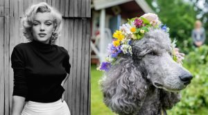 50 Famous Quotes About Dogs