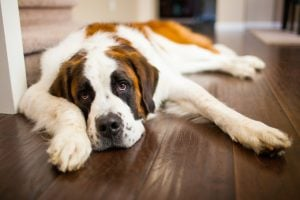 The Silent Killer: Zinc Deficiency And Your Dog