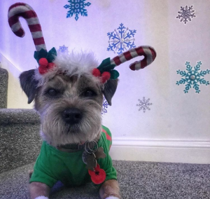 Elf: 30 Dogs Dressed As Holiday Elves To Make Your Spirits Bright [PICTURES]