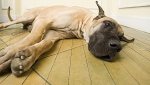 Bloat In Dogs: Symptoms, Causes, & Treatments