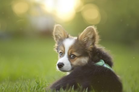 30 amazing dog and puppy facts to share with kids pictures