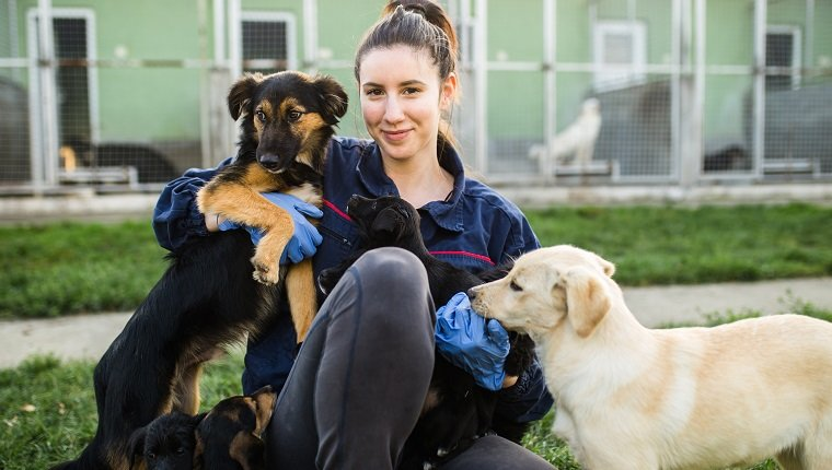 Young woman in dog shelter playing with dogs an choosing which one to adobt.