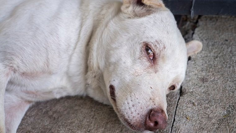 close-up photo of the face of dog laying