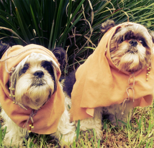40 Dogs Dressed As Ewoks [PICTURES]