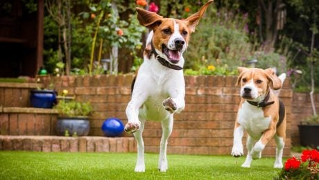 Top 7 Tips To Keep Your Yard Pet-Friendly