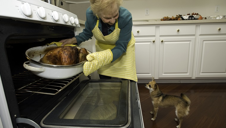 Holiday turkey coming out of the oven with a dog