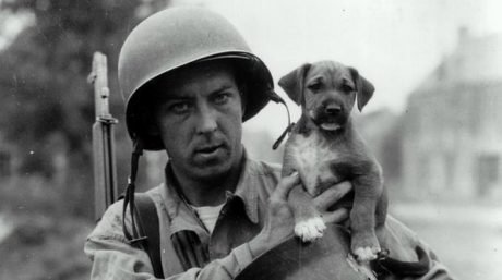 10 Photos Of War Dogs