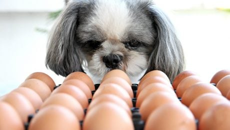 Can Dogs Eat Eggs? Are Eggs Safe For Dogs?
