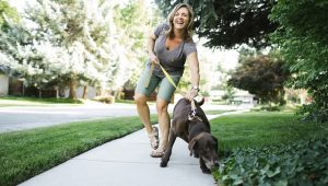 Dear Labby: How Much Should I Let My Dog Sniff On Our Walks?
