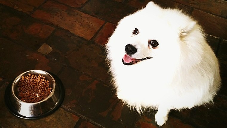 Dear Labby Why Doesn T My Dog Eat Without Me Dogtime