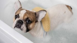 Dear Labby: Why Does My Dog Go Crazy After Taking A Bath?