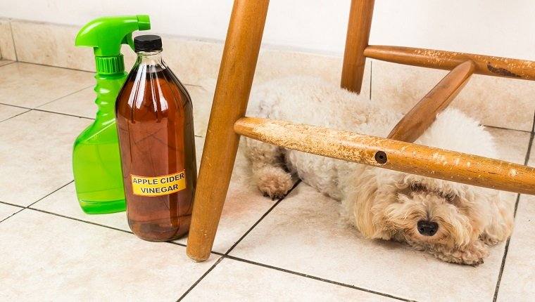 Apple cider vinegar discourage pets from chewing on furnitures
