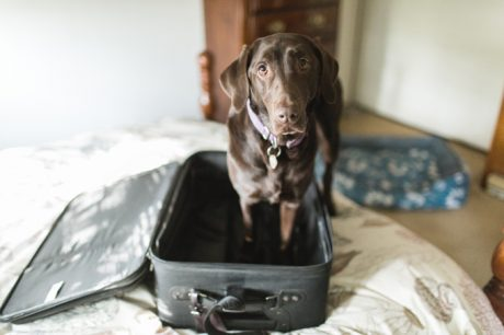 Travel Tips So You Can Relax When You Are Away From Your Dog