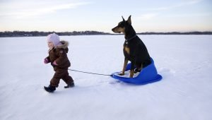 5 Fun Things To Do With Your Dog In The Snow