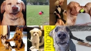 10 Funny Dog Videos: The YouTube Classics