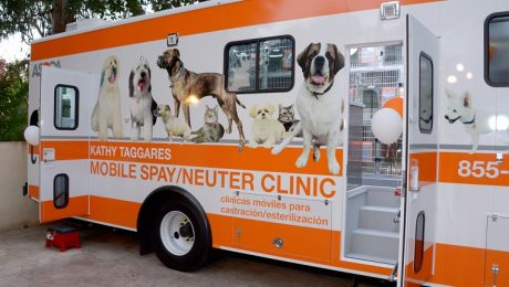 Low Cost Spay & Neuter Clinics Aren't Meant For Everyone