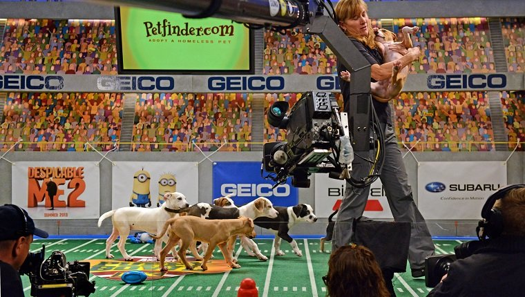 "**Embargoed til 2/5/2013** NEW YORK CITY, NY - NOVEMBER 11: Sandi Buck removes an overactive puppy from the set during the taping of Animal Planet's ""Puppy Bowl IX"" program in New York City, NY on November 11, 2012. Buck is from the American Humane Association and makes sure all animals are safe during the two-day production. The mock football game will air as counter programming to the actual superbowl. On the internet, puppy bowl has been a huge sensation and now in it's 9th year. The puppies used in the show are from shelters and rescue organizations from across the country. The kittens in the half time show came from a shelter located in New York City. (Photo by Linda Davidson / The Washington Post via Getty Images)"
