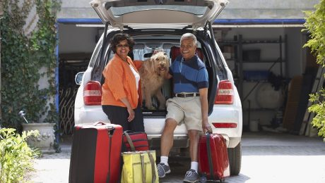 Gold Souls, Gray Faces: 7 Tips For Traveling By Car With Senior Dogs