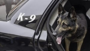 7 Weird Stories About Police Dogs