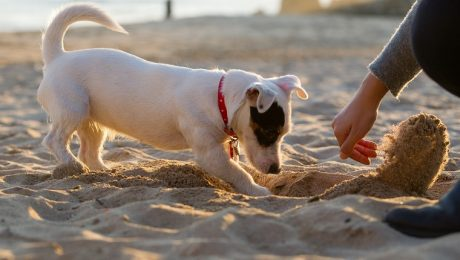 7 Crazy Things People Found While Walking Their Dogs