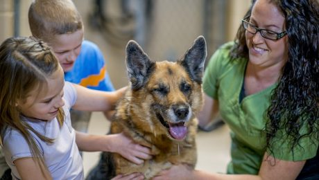 Dogs For Adoption: How To Find The Right Animal Shelter