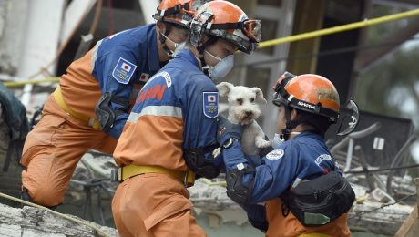 8 Dogs Who Survived Horrific Natural Disasters And Gave Us Hope