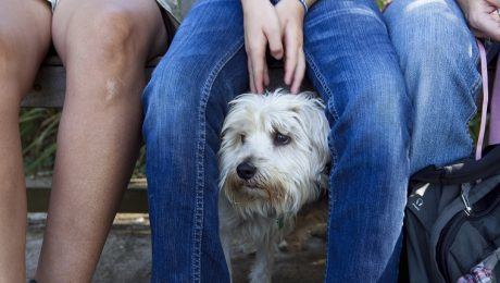 Is Your Anxiety Contagious To Your Dog?