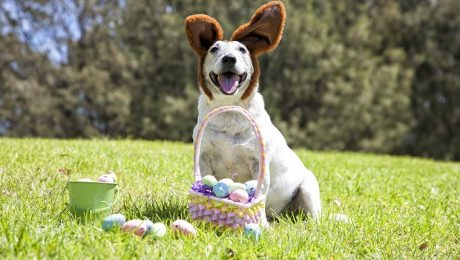 12 Woof-Worthy Easter Basket Stuffers For Dogs