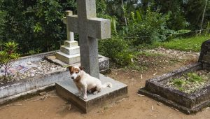 Why Do Some Dogs Stay By Their Owners' Graves?