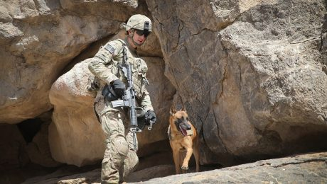 5 Military Dogs Who Deserve To Be Honored For K9 Veterans Day