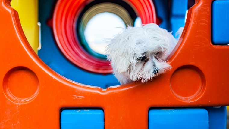 Puppy looking puzzled in a tunnel in a plastic playground