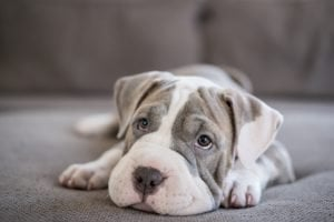 How To Give Your Puppy The Healthiest Start To Life