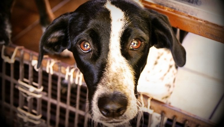 Puppy Mill Action Week: How You Can Help Fight Puppy Mills