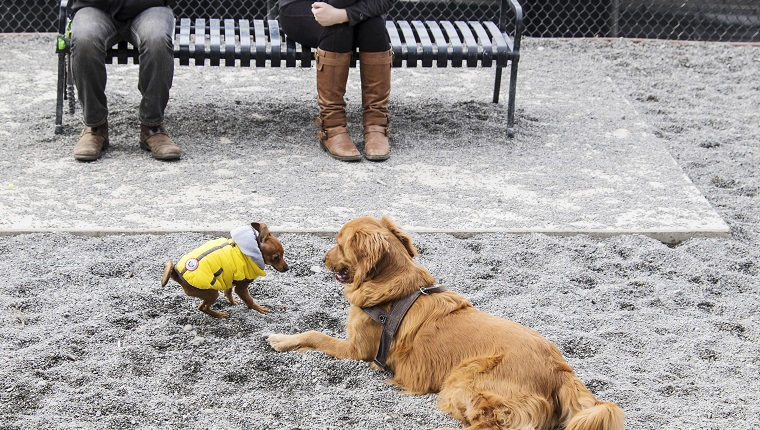 Two dogs of very different sizes play in the gravel of an urban dog park while their owners sit on a bench nearby.
