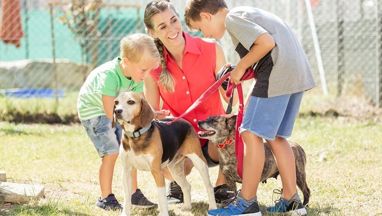 Mom with her sons walking dogs of an animal shelter to get to know them