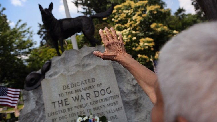 HARTSDALE, NY - JUNE 10: Doloris Speyer pays respects during an annual memorial service for military working dogs at the Hartsdale Pet Cemetery on June 10, 2012 in Hartsdale, New York. Thousands of dogs have served in American military conflicts since World War I, most recently in Afghanistan detecting roadside bombs and mines meant for U.S. troops. The cemetery, established in 1896, is the oldest pet cemetery in the United States and serves as the final resting place for tens of thousands of animals. (Photo by John Moore/Getty Images)