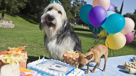 National Dog Party Day: Tips To Make Your Dog Party A Barking Blast