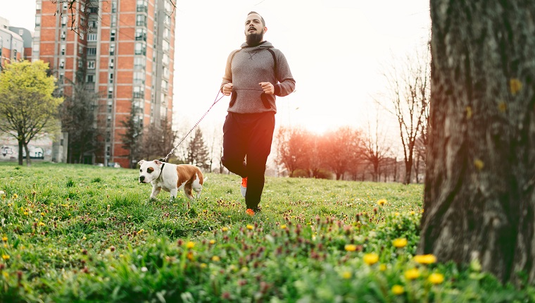 Man jogging with his pet, Staffordshire bull terrier. He is jogging in his neighborhood, in local park.