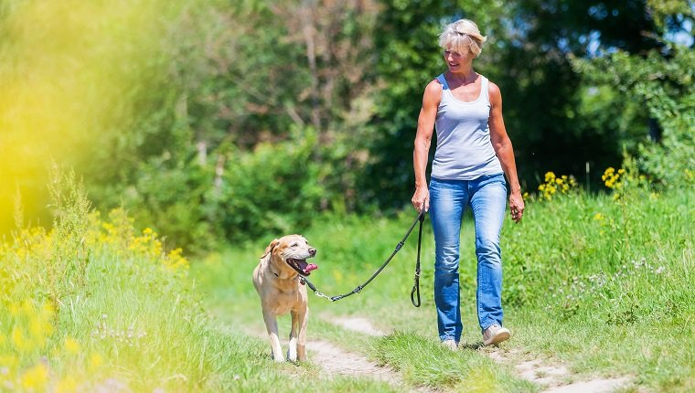 mature woman hiking with a dog at the leash in a rural landscape